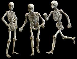 骨の健康に必要な ビタミン